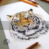 Illustration faite main par Chat Pristy d'un tigre au crayons de couleur