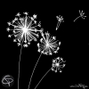 Graines de fleurs de pissenlit qui s'envolent au vent