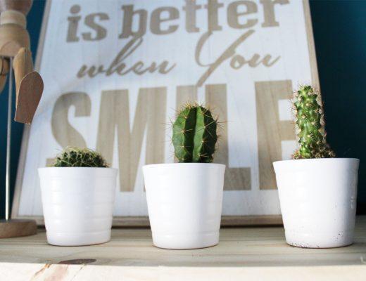 Trio de petits cactus pour décorer l'atelier